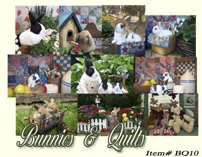 Bunnies and Quilts