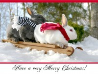 Christmas Cards-Bunny Buddies Sledding