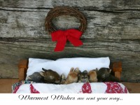 Christmas Cards-Warmest Wishes
