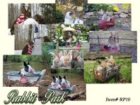 Rabbit Park Boxed Set