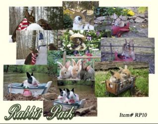 Rabbit Park Boxed Set