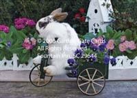 AHL 141 Special Delivery Bunny
