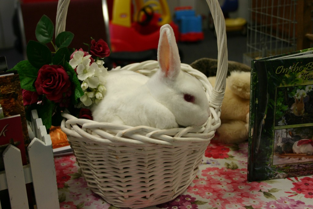 Meet Truly-our Mini Rex!